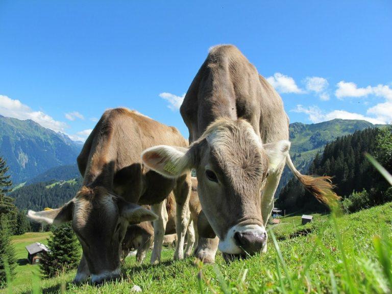 Milchprodukte Fitness, Coaching und Personaltrainer Berlin, Ernährungscoach
